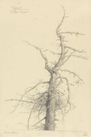Toter Baum, 2005, Graphit auf Papier, 42,5 x 28,5 cm