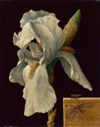 Iris, 2015, Mischtechnik auf Maltafel, 19 x 15 cm