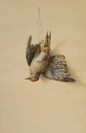 Michael Triegel, Buntspecht, 2017, Wasserfarben auf Papier, 47 x 31 cm